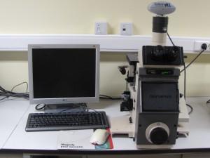 Olympus PMG3 optical microscope.